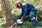 Banks Tree felling services 21