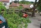 Banks Tree felling services 41
