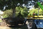 Banks Tree felling services 4