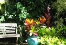 Banks Tropical landscaping 11