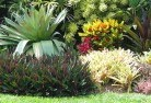 Banks Tropical landscaping 9